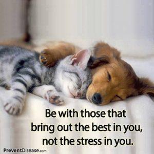 Stress Free Friends